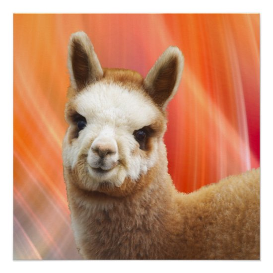Adorable Alpaca Perfect Poster