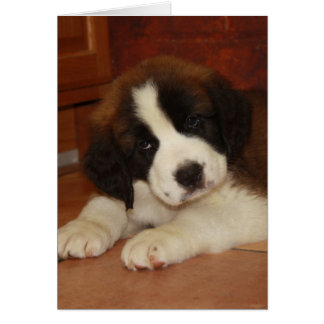 Adorable and Sweet St. Bernard Puppy Greeting Cards