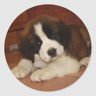 Adorable and Sweet St. Bernard Puppy Classic Round Sticker
