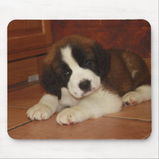 Adorable and Sweet St. Bernard Puppy Mouse Pad