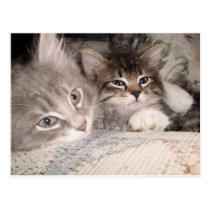Adorable animal postcards