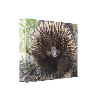 Adorable Australian Echidna Canvas Print