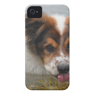Adorable Australian Shepherd iPhone 4 Case-Mate Case