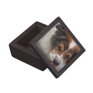Adorable Australian Shepherd Premium Trinket Boxes