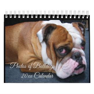 Adorable Baby & Adult English Bulldogs Calendar