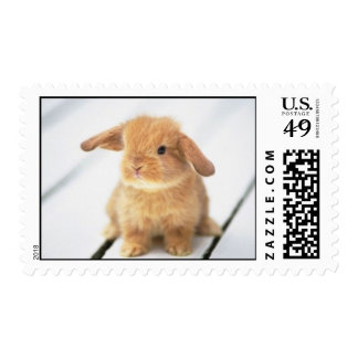 Adorable Baby Bunny Rabbit Postage Stamps!