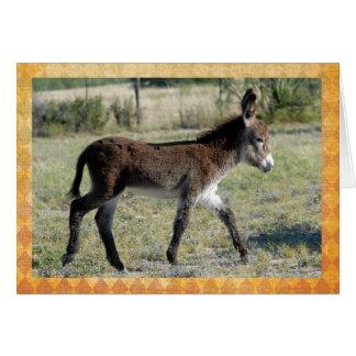 Adorable baby burro congratulations card. greeting card