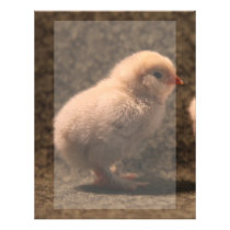 Adorable Baby Chick Stationery