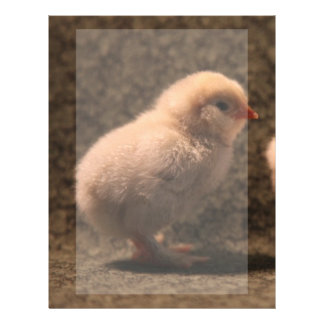 Adorable Baby Chick Stationery Letterhead