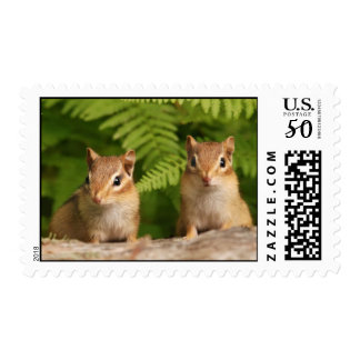 Adorable Baby Chipmunk Siblings Postage