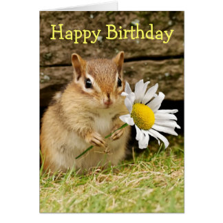 Adorable Baby Chipmunk with Daisy - Happy Birthday Greeting Card