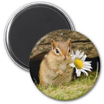 Adorable Baby Chipmunk with Daisy Magnet