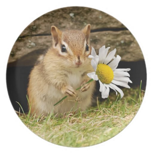 Adorable Baby Chipmunk with Daisy Melamine Plate