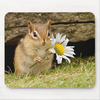 Adorable Baby Chipmunk with Daisy Mouse Pad