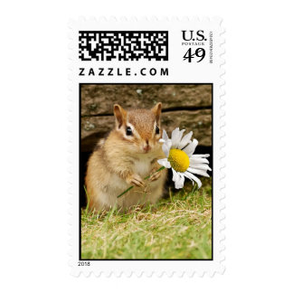 Adorable Baby Chipmunk with Daisy Postage