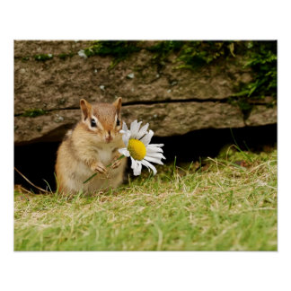 Adorable Baby Chipmunk with Daisy Poster
