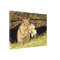 Adorable Baby Chipmunk with Daisy Wrapped Canvas