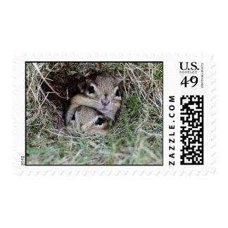 Adorable Baby Chipmunks Faces Smooshed Together Postage Stamps