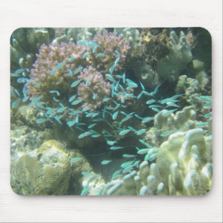 Adorable Baby Damsel Fish Mouse Pad