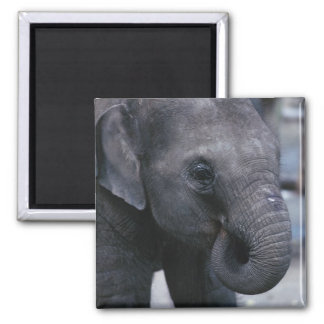 Adorable Baby Elephant 2 Inch Square Magnet
