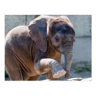 Adorable Baby Elephant Postcard