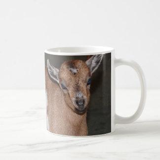 Adorable baby goat, coffee mug
