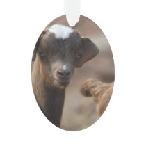 Adorable Baby Goat Ornament