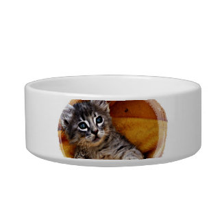 Adorable Baby kitten rescue pet food bowl