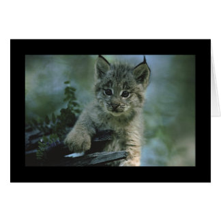 Adorable Baby Lynx Greeting Card