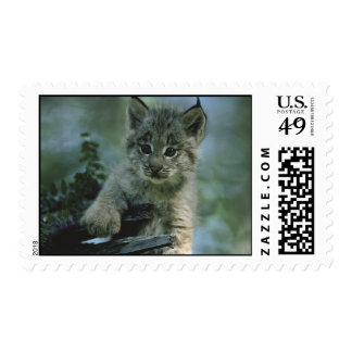 Adorable Baby Lynx Stamp