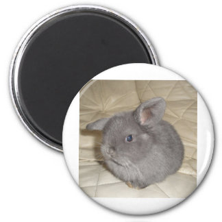 Adorable Baby Mini Lop 2 Inch Round Magnet