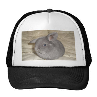 Adorable Baby Mini Lop Hats