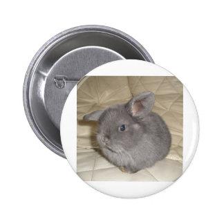 Adorable Baby Mini Lop Pinback Button