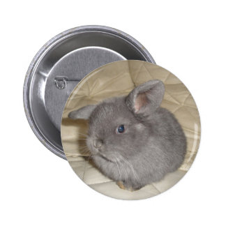 Adorable Baby Mini Lop Pinback Buttons