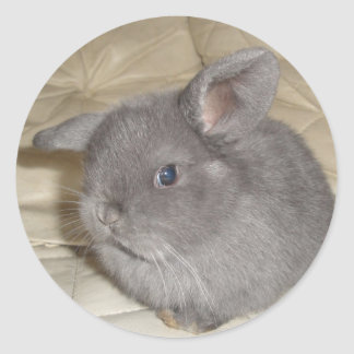 Adorable Baby Mini Lop Stickers