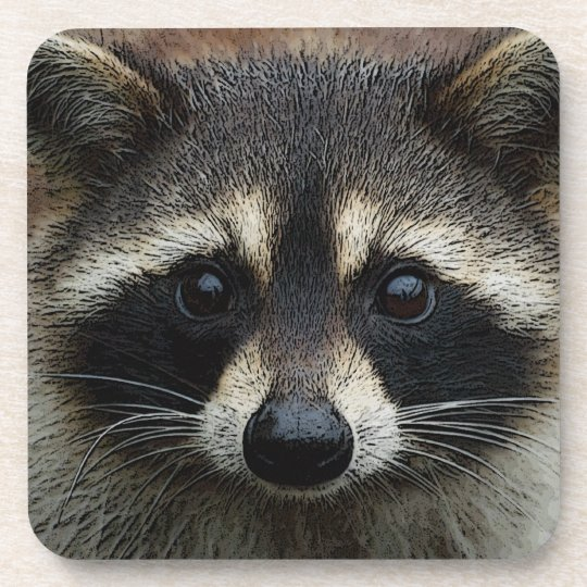Adorable Baby Raccoon Face Mask Stare Coaster | Zazzle.com Raccoon Face