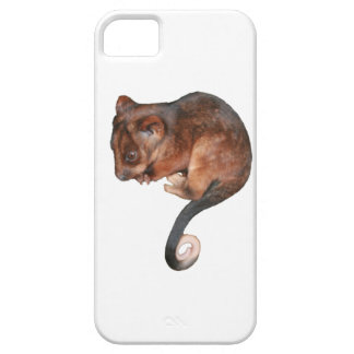 Adorable Baby Ringtail Possum in Australia iPhone SE/5/5s Case
