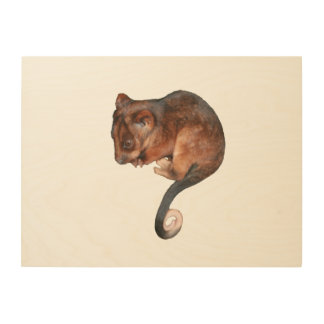 Adorable Baby Ringtail Possum in Australia Wood Print