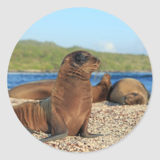 Adorable baby sea lion Galapagos Islands Round Stickers