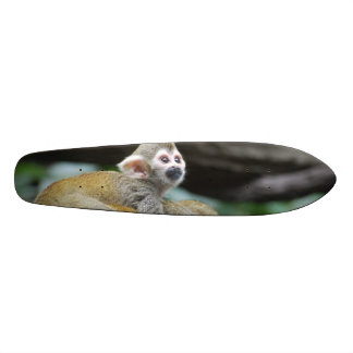 Adorable Baby Squirrel Monkey Skate Boards