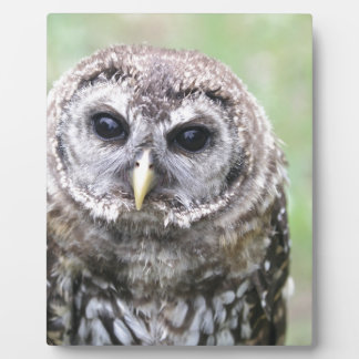 Adorable Barred Owl Plaque