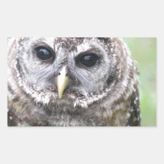 Adorable Barred Owl Rectangular Sticker