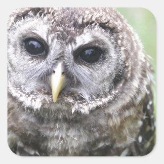 Adorable Barred Owl Square Sticker