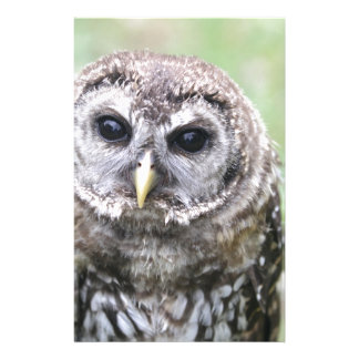 Adorable Barred Owl Stationery