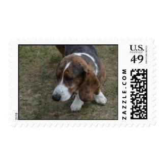 Adorable Basset Hound Postage Stamps