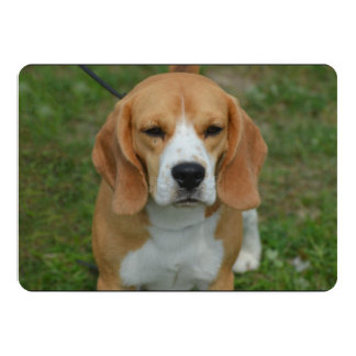 Adorable Beagle Personalized Announcements