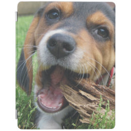 Most Inspiring Smart Beagle Adorable Dog - adorable_beagle_puppy_chewing_on_wood_ipad_smart_cover-r8bc42bc5e2a3449a8510de2c4e17b800_zwpxi_260  Picture_789425  .jpg?rlvnet\u003d1
