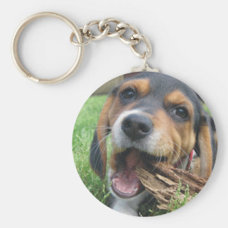 Adorable Beagle Puppy Chewing on Wood Keychain