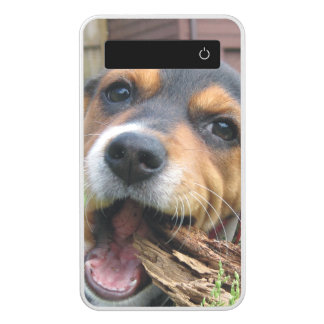 Adorable Beagle Puppy Chewing on Wood Power Bank