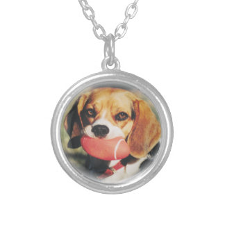 Adorable Beagle With Football Necklace